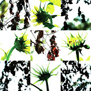 Photo Collage Prints - Nature Scape 008 Print by Robert Glover