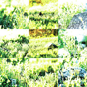 Photo Grids Art - Nature Scape 009 by Robert Glover