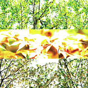 Over-exposed Prints - Nature Scape 011 Print by Robert Glover