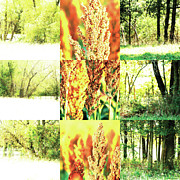 Photo Grids Prints - Nature Scape 013 Print by Robert Glover