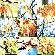 Photo Grids Prints - Nature Scape 014 Print by Robert Glover