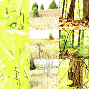 Photo Grids Prints - Nature Scape 015 Print by Robert Glover