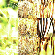 Photo Grids Prints - Nature Scape 016 Print by Robert Glover