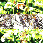Photo Grids Prints - Nature Scape 019 Print by Robert Glover