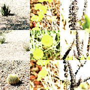 Photo Grids Prints - Nature Scape 020 Print by Robert Glover