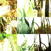 Photo Grids Prints - Nature Scape 022 Print by Robert Glover