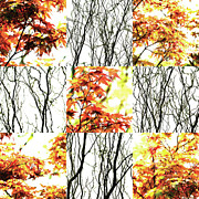 Photo Grids Prints - Nature Scape 023 Print by Robert Glover