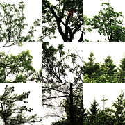 Photo Grids Art - Nature Scape 026 by Robert Glover
