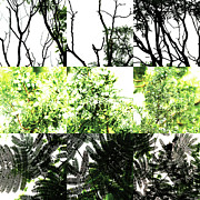 Photo Grids Prints - Nature Scape 029 Print by Robert Glover