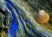 Shell Texture Posters - Natures Abstract Poster by Lori Seaman