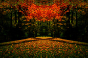 Autumn. Fall Colors - Natures Allure by Anthony Rego
