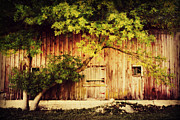 Barn Door Posters - Natures Awning Poster by Julie Hamilton