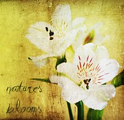 Oregon Flowers Posters - Natures Blooms Poster by Cathie Tyler