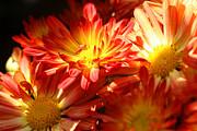 Brenda Giasson - Natures Glow