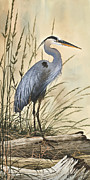 Herons Metal Prints - Natures Harmony Metal Print by James Williamson