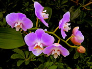 Orchids Art - Natures Orchids by Mindy Newman