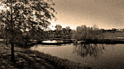 Lienzo Prints - Natures Reflection Sepia Print by Sergio Aguayo