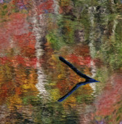 Colors Of Autumn Posters - Natures Reflections Poster by Susan Candelario