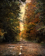 Autumn Landscape Prints - Natures Secret Print by Jai Johnson