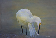 Preening Prints - Natures Wildlife Beauty Print by Deborah Benoit