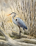 Blue Heron Framed Prints - Natures Wonder Framed Print by James Williamson