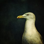 Seagull Photo Prints - Naujaq Print by Priska Wettstein