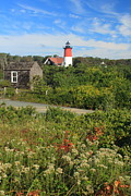 Nauset Beach Framed Prints - Nauset Lighthouse Late Summer Flowers Framed Print by John Burk