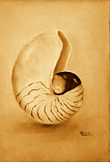 Seashell Art Prints - Nautilus sea shell Print by Gabriela Valencia