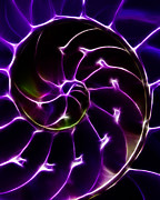 Sea Shell Art Digital Art Prints - Nautilus Shell - Electric - Purple Print by Wingsdomain Art and Photography