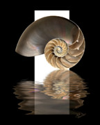 Dramatic Digital Art - Nautilus Shell by Judi Quelland