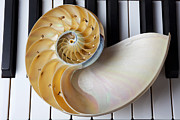 Pianos Prints - Nautilus shell on piano keys Print by Garry Gay