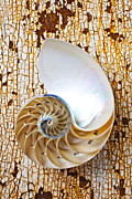 Old Shells Prints - Nautilus shell on rusty table Print by Garry Gay