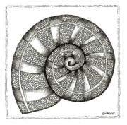 Nautilus Print by Stephanie Troxell