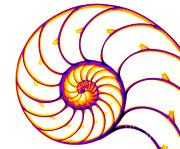 Ted Kinsman - Nautilus