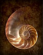 Seashell Metal Prints - Nautilus Metal Print by Tom Mc Nemar