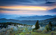 Blue Ridge Mountains Posters - NC Blue Ridge Parkway Landscape in Spring - Blue Hour Blossoms Poster by Dave Allen