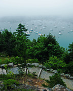 Somes Sound Prints - NE Harbor Maine seen from Thuya Gardens Mt Desert Island  Print by Lizi Beard-Ward