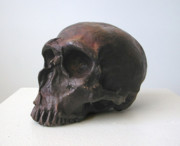 Featured Sculptures - Neaderthal Skull by John Gibbs