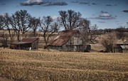 Cornfield Originals - Nebraska Farm by Tim Perry