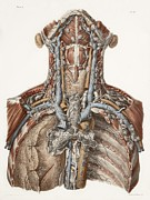 Hand-colored Lithograph Framed Prints - Neck Anatomy, 19th Century Artwork Framed Print by 
