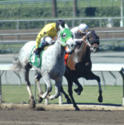 Race Horse Photos - Neck and Neck by Clarence Alford