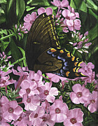Phlox Originals - Nectars Bounty by Gail Darnell
