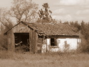 Old Shack Posters - Needs Paint - Soft Focus Poster by Carol Groenen