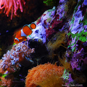 Clown Fish Photo Metal Prints - Nemo Metal Print by Simone Hester