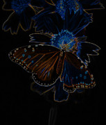 Neon Butterfly Print by Charles Dobbs