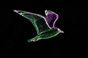 Flying Seagull Digital Art Framed Prints - Neon Gull Framed Print by Betty LaRue