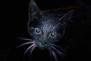 Kitten Digital Art - Neon Kitty by Christine Mitchell