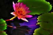 Violet Photo Originals - Neon Lily by John Absher