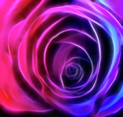 Abstract Rose Digital Art - Neon Rose - Pinks to Purple by Lesley Smitheringale