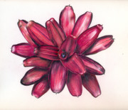 Neoregelia Paintings - Neoregelia Christmas Cheer by Penrith Goff